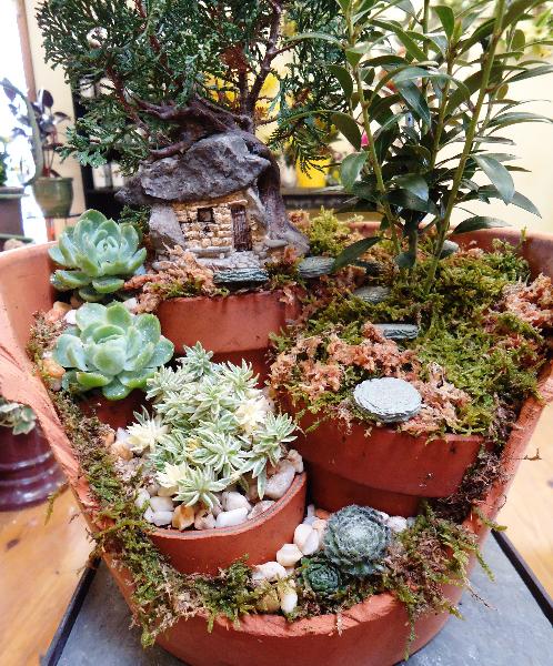 Miniature Gardening Town Amp Country Nurseries