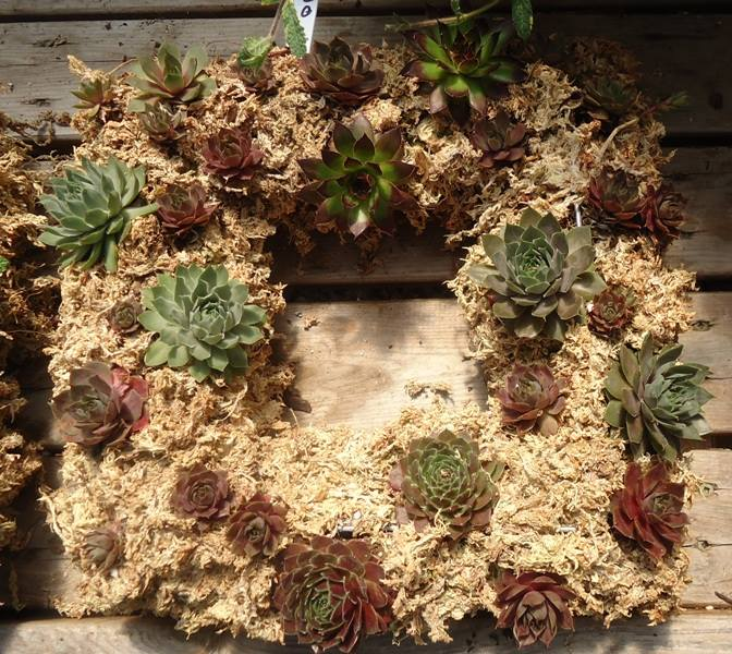 living wreath with succulents