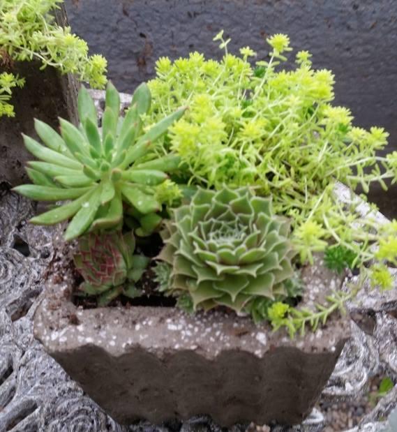 small succulent garden