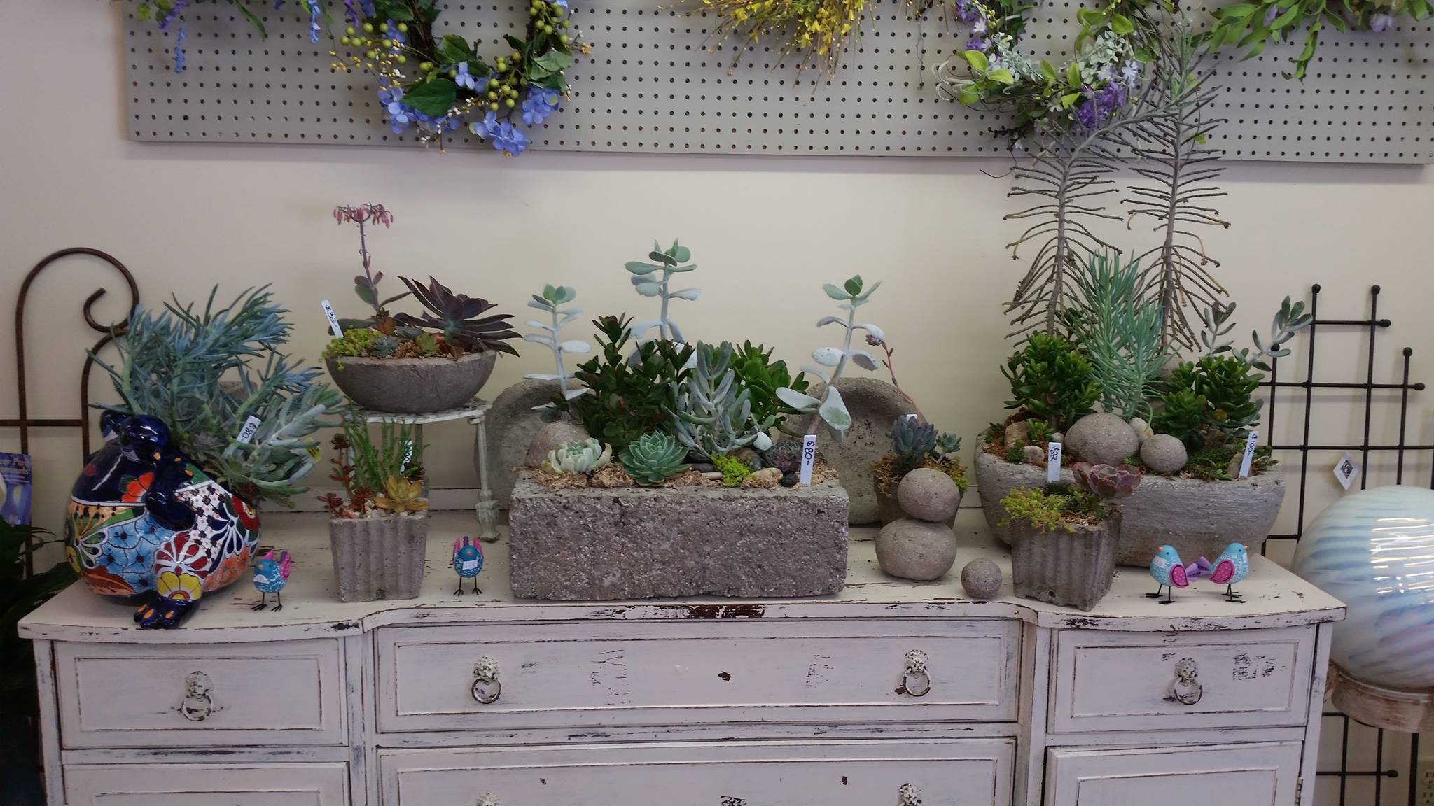 succulent display