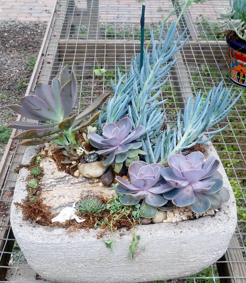succulent garden 5