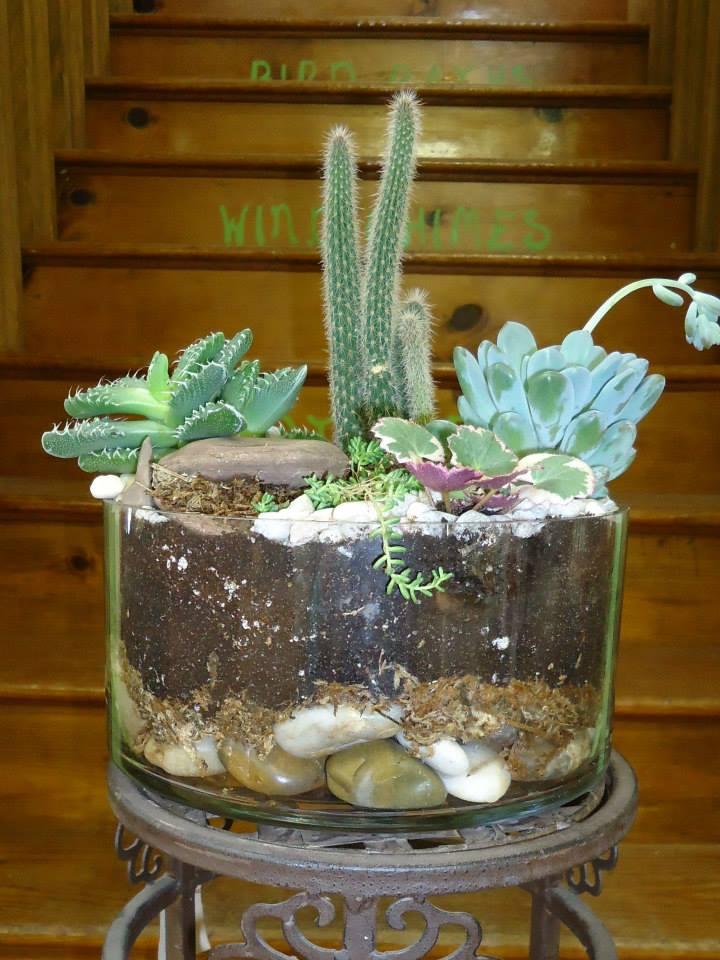succulent garden 6-1