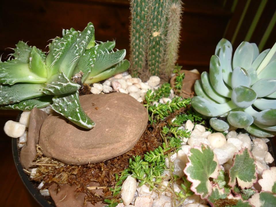succulent garden 6