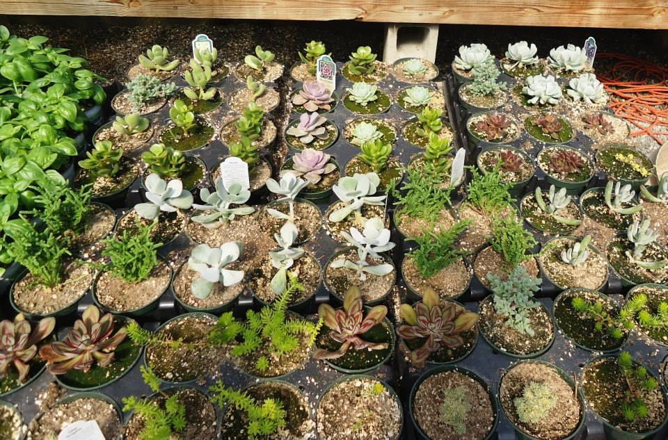 succulent in 4