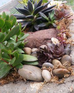 succulents  2
