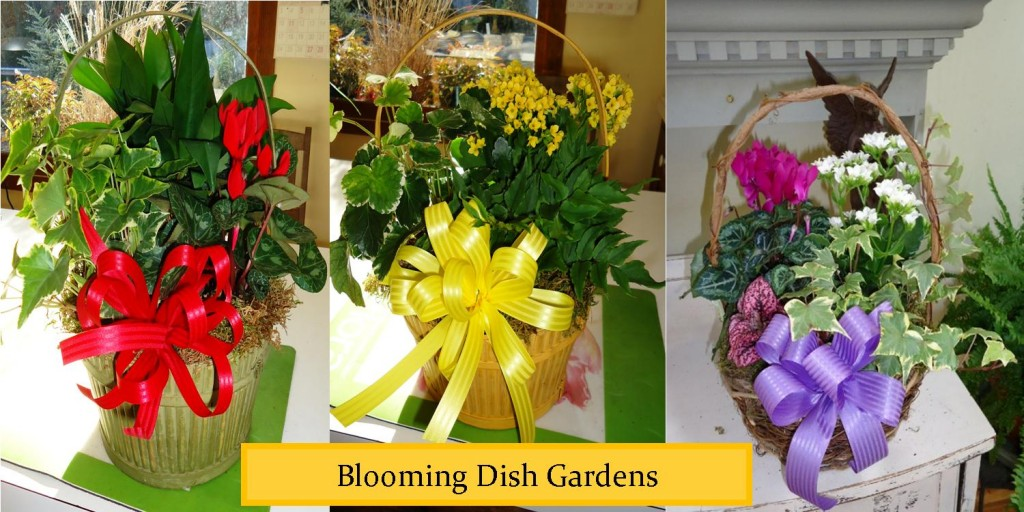 dishgardens