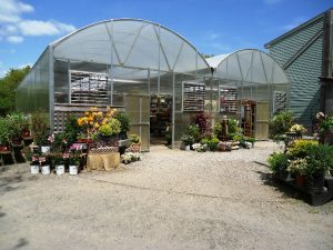 Our Greenhouse always has something new and exciting to check out!