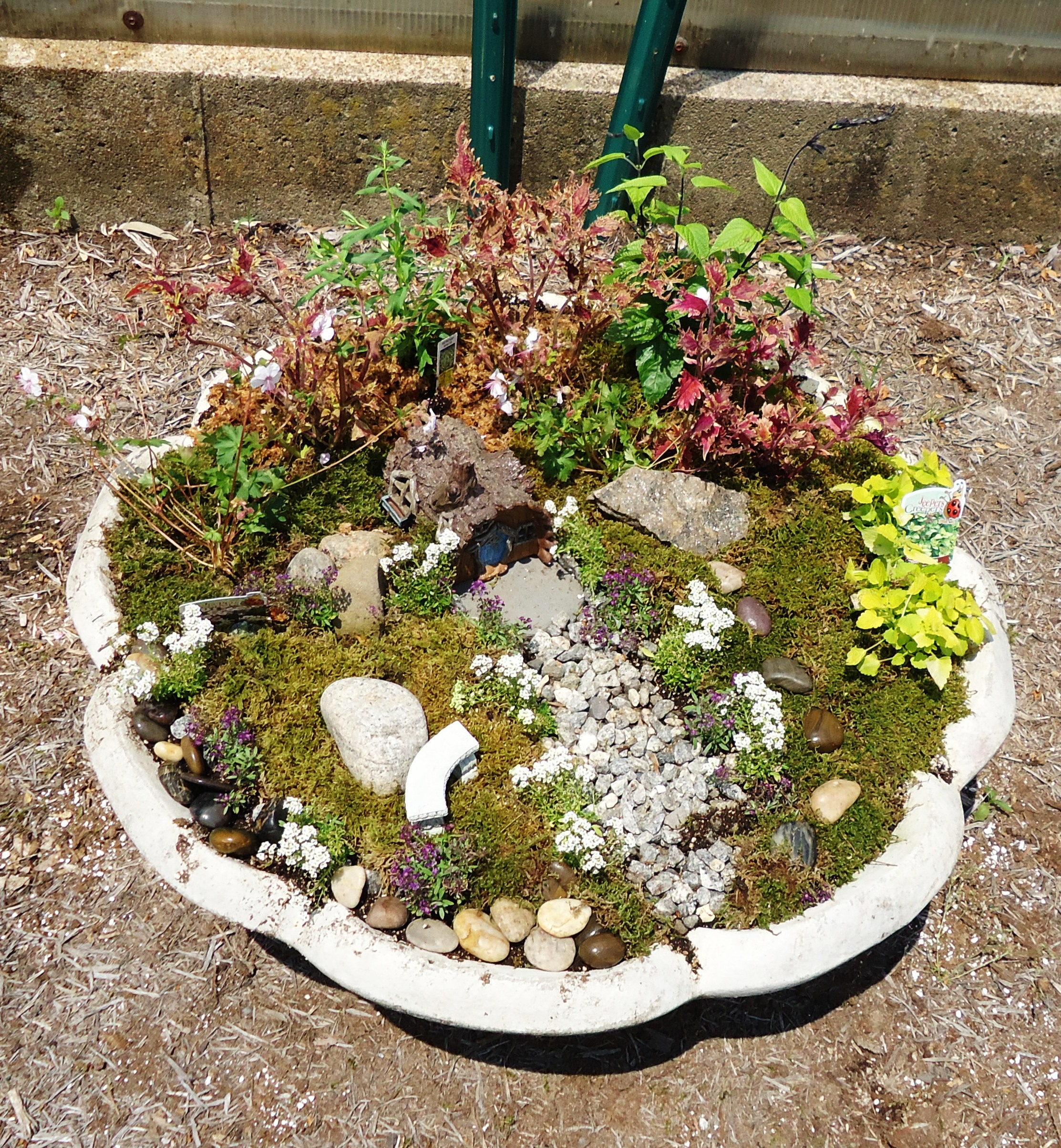 Miniature Gardening - Town and Country Nurseries