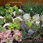 plants-for-inspiration